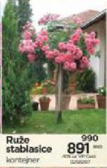 Ruže stablasice