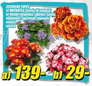 Sezonsko cveće Rasad