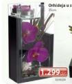 Orhideja u staklenom stalku