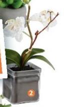 Ukrasna veštačka biljka Shahanna