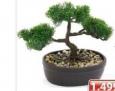 Dekorativno Bonsai drvo u keramičkoj saksiji