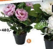 Ukrasna veštačka biljka Rosia