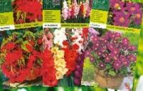 Seme Gladiolus Mixed A10