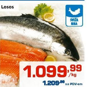 Riba losos
