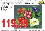 Saksijsko cveće Primula vulgaris