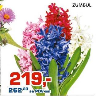 Cveće Zumbul