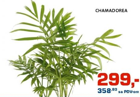 Cveće Chamadorea