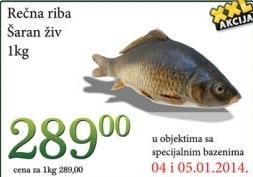 Riba šaran