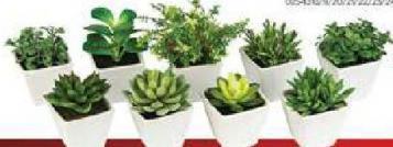 Veštačke biljke u saksiji