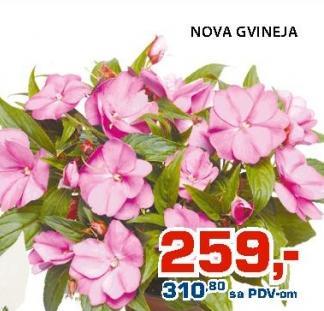 Cveće Nova Gvineja