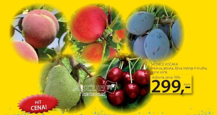 Sadnice voćaka