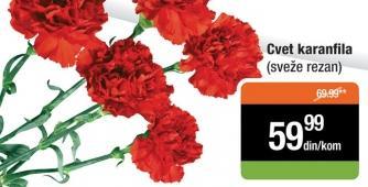 Cvet karanfila