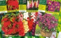 Seme Begonia Pendula Red A5