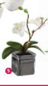 Veštačko cveće Shahanna
