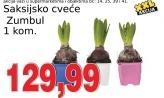 Saksijsko cveće Zumbul