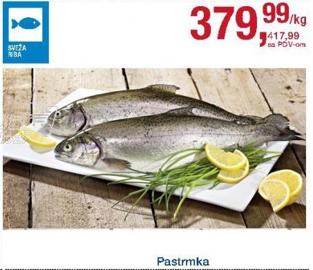Riba pastrmka