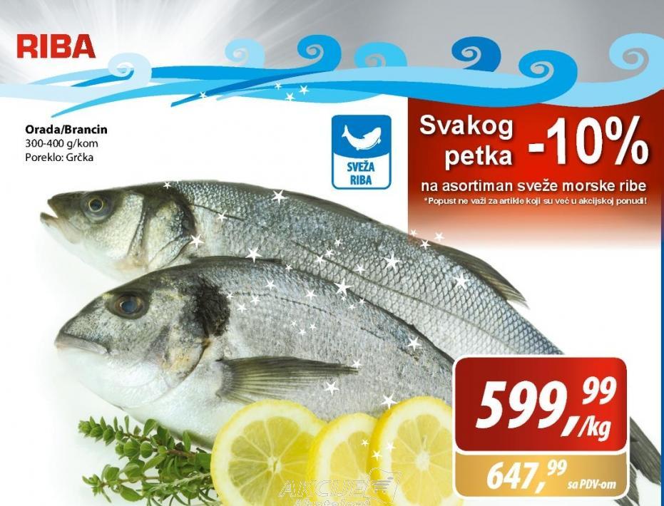 Riba brancin