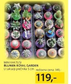 Mini kaktusi