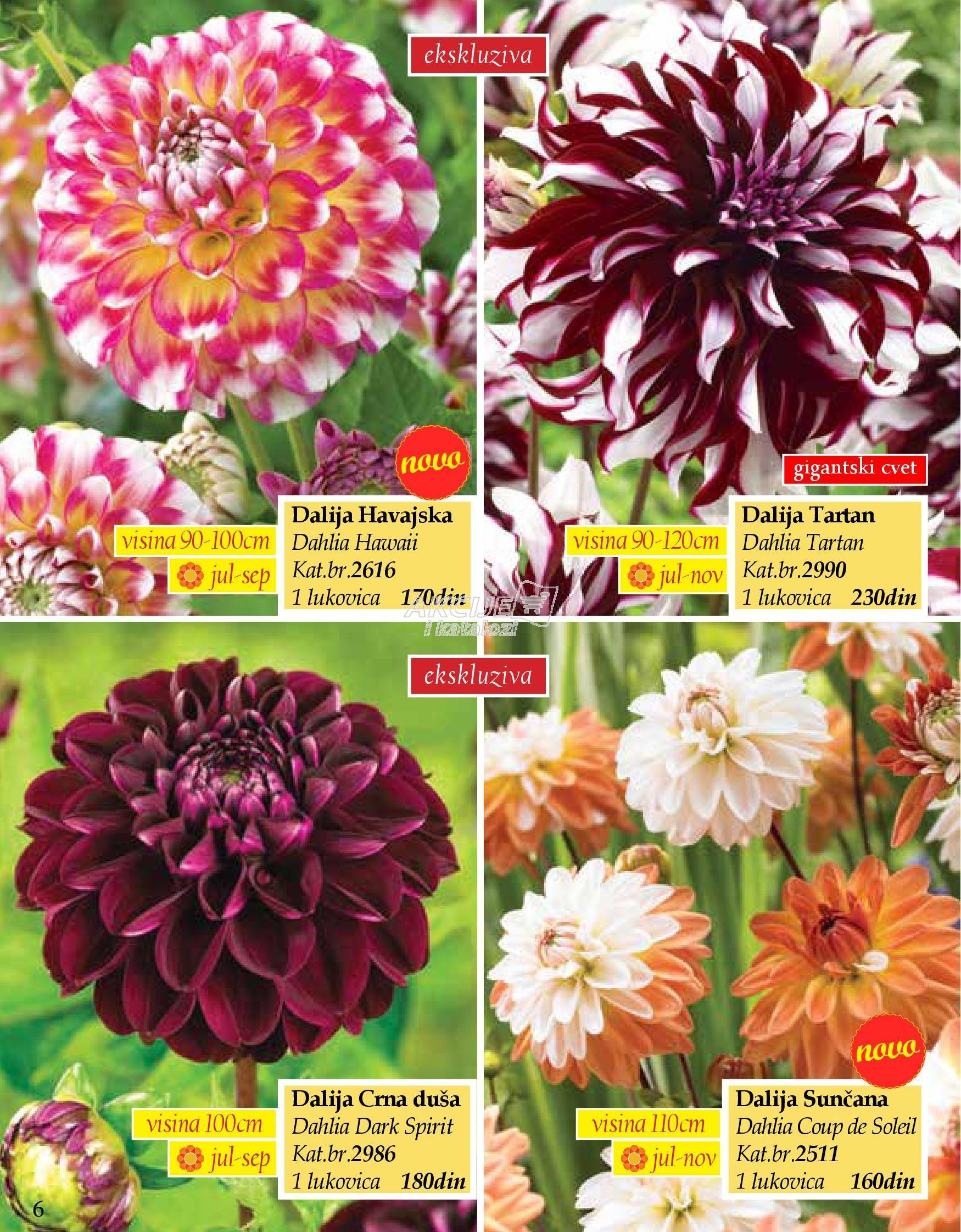 Flora Ekspres akcija sve za vašu baštu
