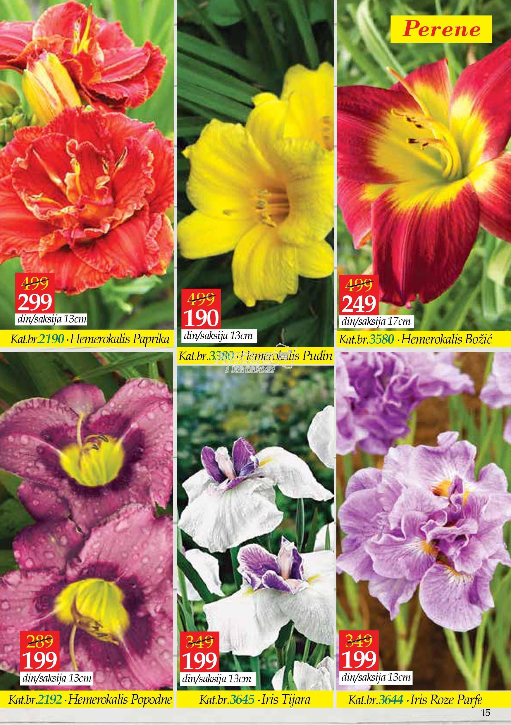 Flora Ekspres akcija letnje kupovine