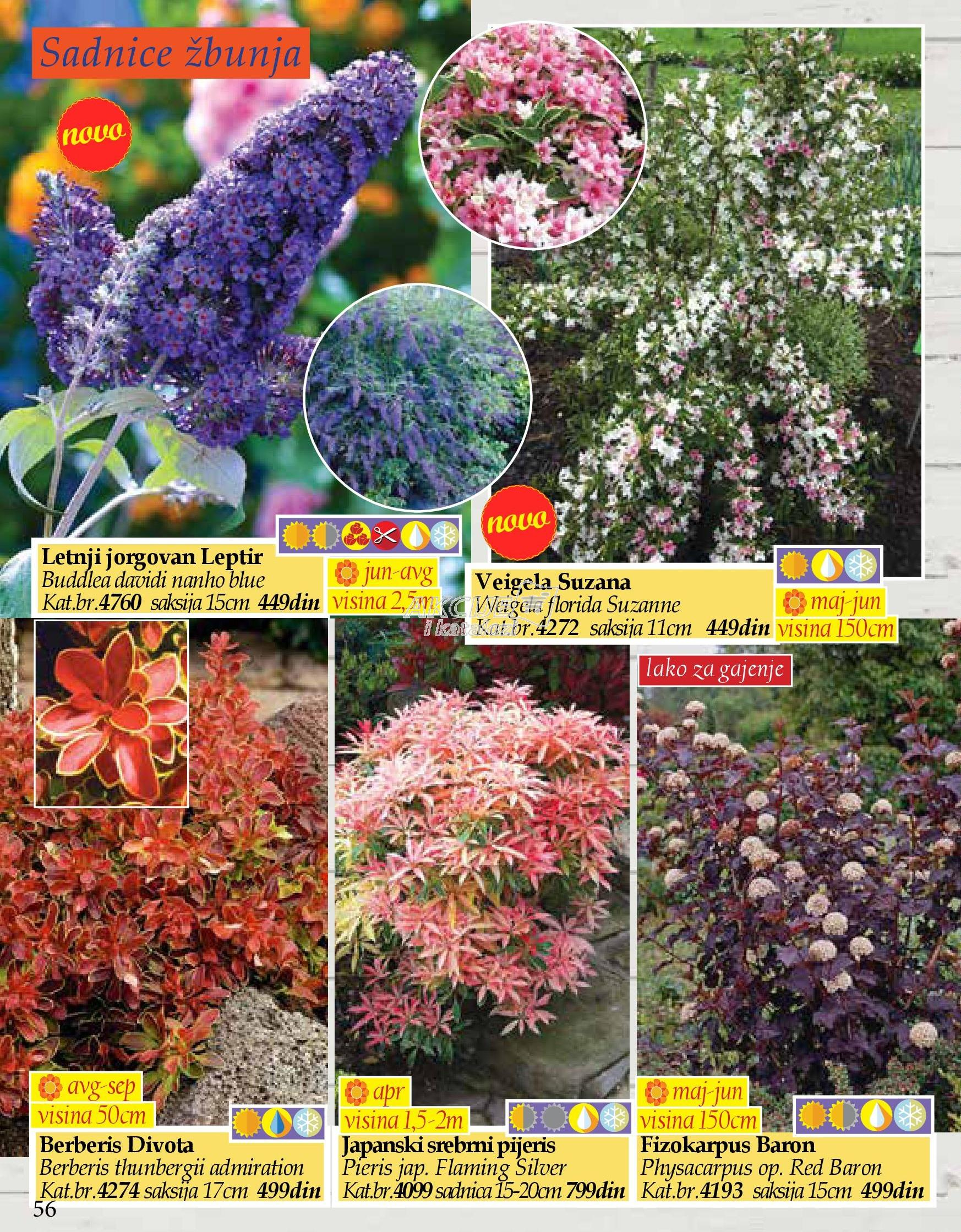 Flora Ekspres akcija jesenje kupovine