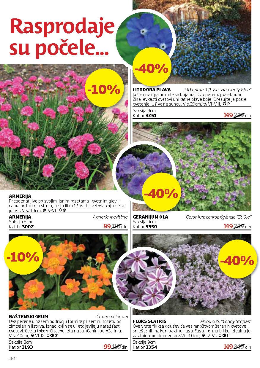 Flora Express Katalog Leto