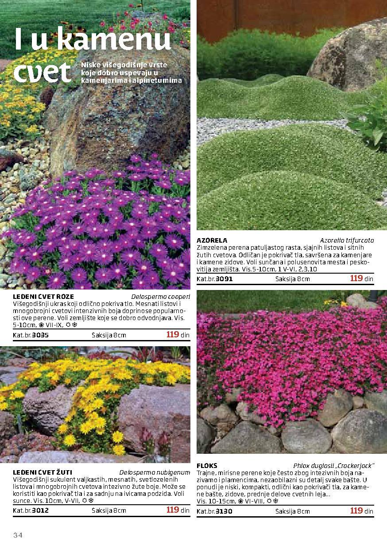 Flora Ekspres katalog najbolja ponuda za vaše cveće