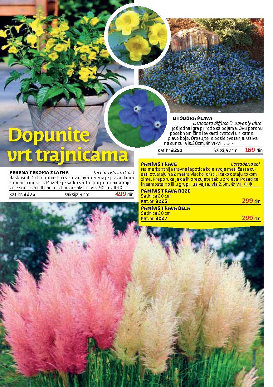 Flora Ekspres katalog letnje ponude
